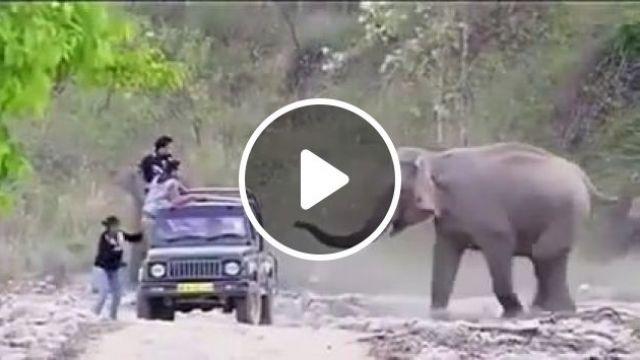 Elephant's joke, haha