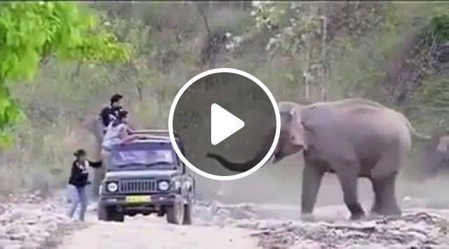 Elephant's joke, haha, elephant, joke, animal