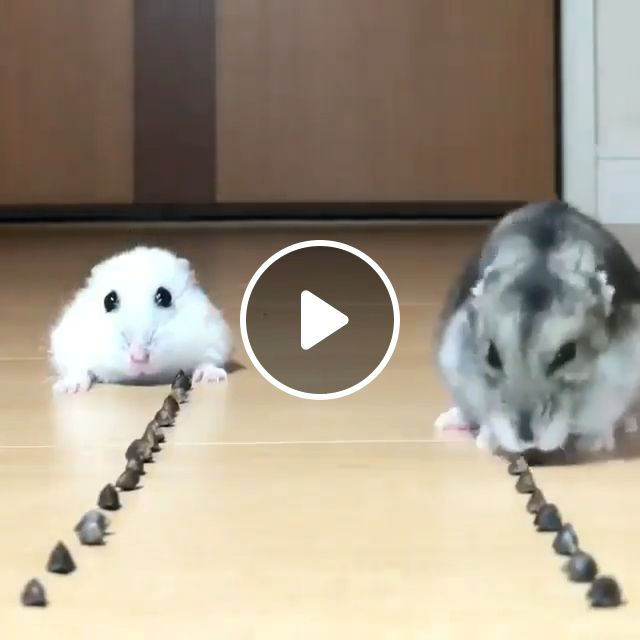 Guess Who Will Be The Winner? - Video & GIFs   pet, eat, winner