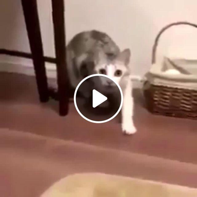 This Cat Meme - Video & GIFs   Mashup meme, cat meme, uff meme