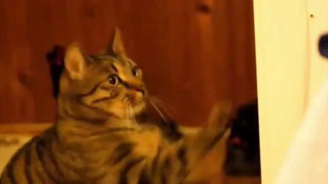 Cat eat mushrooms - Funny Videos - funvizeo.com - funny cat, eat, funny pet, mushrooms, super mario