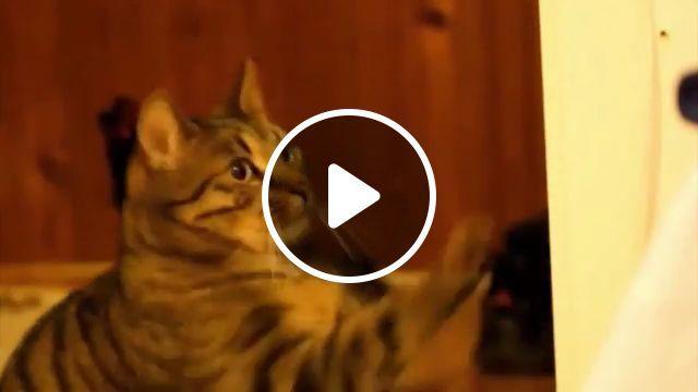 Cat eat mushrooms, funny cat, eat, funny pet, mushrooms, super mario