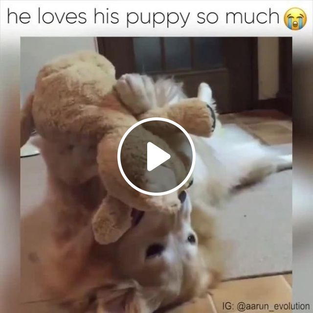 He loves his puppy so much, dog, pet, puppy, love