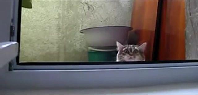 Mischievous Cat - Funny Videos - funvizeo.com - cat, pet, mischievous