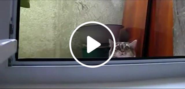 Mischievous Cat, cat, pet, mischievous