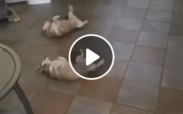 Let's start the dance show, funny dog videos, funny pet videos, dance