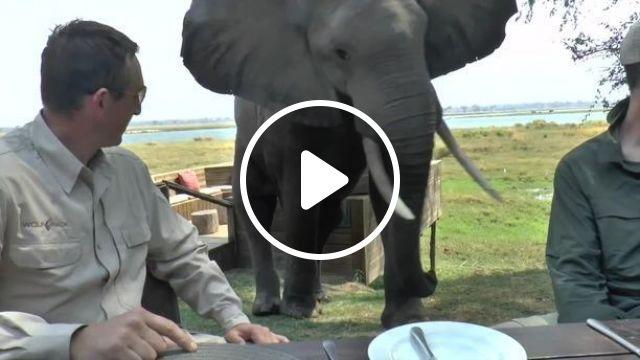 OMG, sit still or run?, elephant, animal, wild