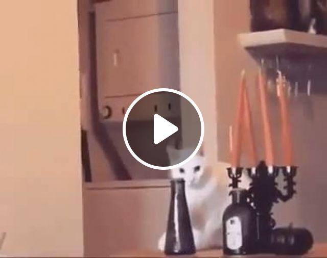 Can cats understand commands?, cat, boss, gun, pet