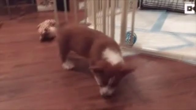 When sleep comes too fast - Funny Videos - funvizeo.com - puppy, pet, dog, sleep