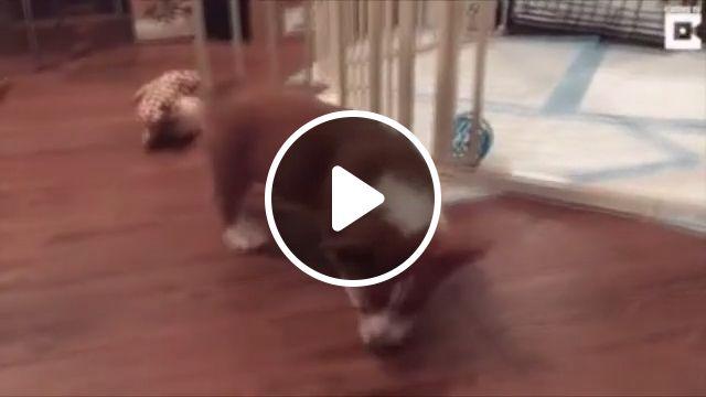 When sleep comes too fast, puppy, pet, dog, sleep