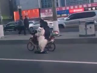 Scooter Dog - Funny Videos - funvizeo.com - scooter, electric bicycle, funny dog, funny pet