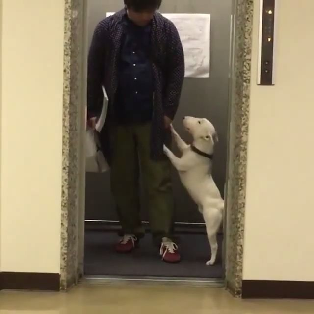 Hey human, can you let me dance a bit? - Funny Videos - funvizeo.com - dog, pet, dance, freestyle