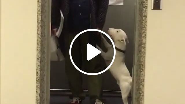 Hey human, can you let me dance a bit?