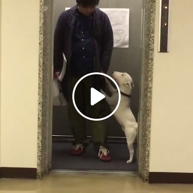Hey human, can you let me dance a bit?, dog, pet, dance, freestyle