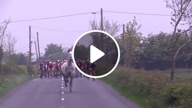 Yeah yeah, he's leading the race, horse, animal, racing, bike