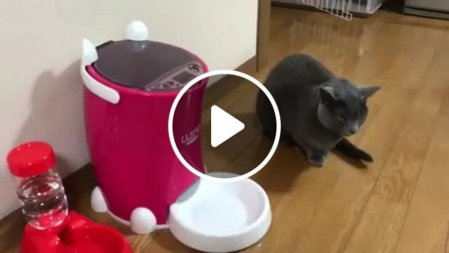 The feeling of surprise when you win the lottery - Funny Videos - funvizeo.com - cat, pet, win, surprise, lottery