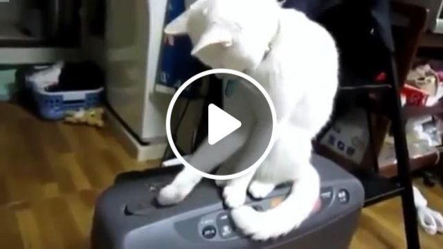 A Very Patient Cat - video - funvizeo.com - cat, pet, patient