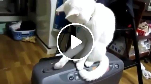 A Very Patient Cat, cat, pet, patient