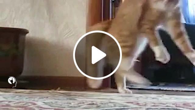 Cat Gone Remix Memes - Video & GIFs | cat memes, truck memes, funny memes, catgone memes