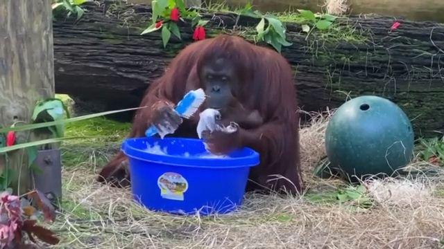 Always keep your hands clean
