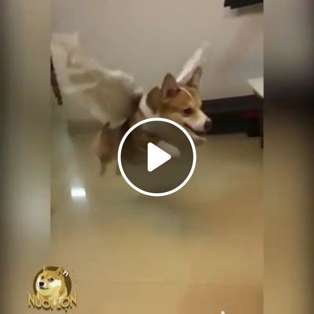 I believe I can fly, dog, pet, adorable, fly