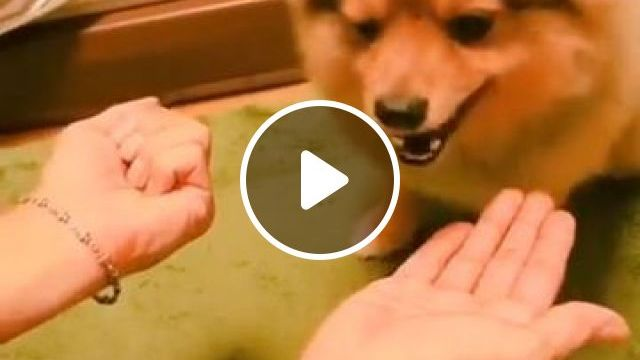 Funny dog owners, dog, pet, owner