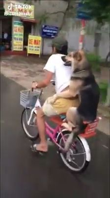 Ride A Bike With A Lovely Dog