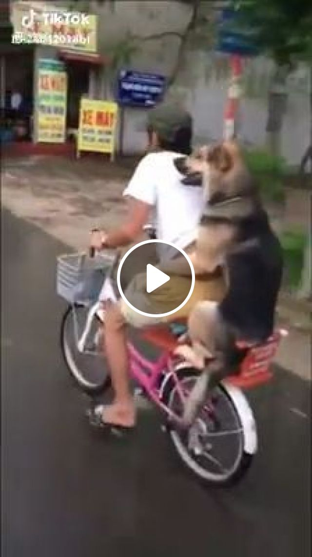 Ride A Bike With A Lovely Dog, cute dog, cute pet, bicycle, ride a bike
