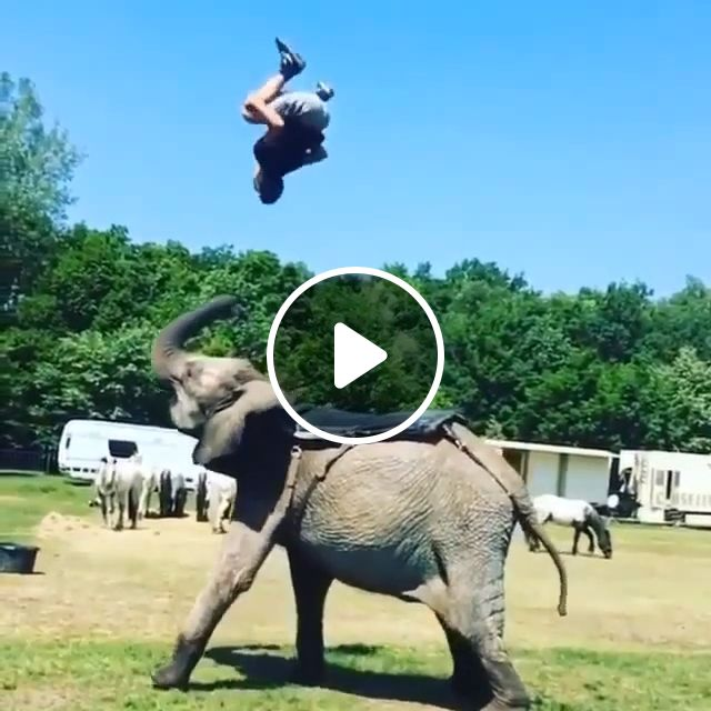 Beautiful Moment!, elephant, animal, performances