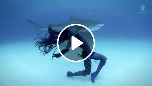 Wild dance, shark, beauty, ocean, wild, dance