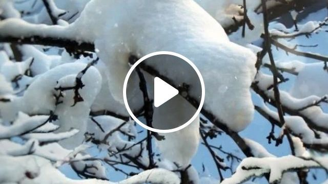 Do you know this animal? - Funny Videos - funvizeo.com - cute, adorable, snow, animal