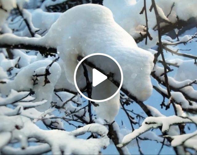 Do you know this animal?, cute, adorable, snow, animal