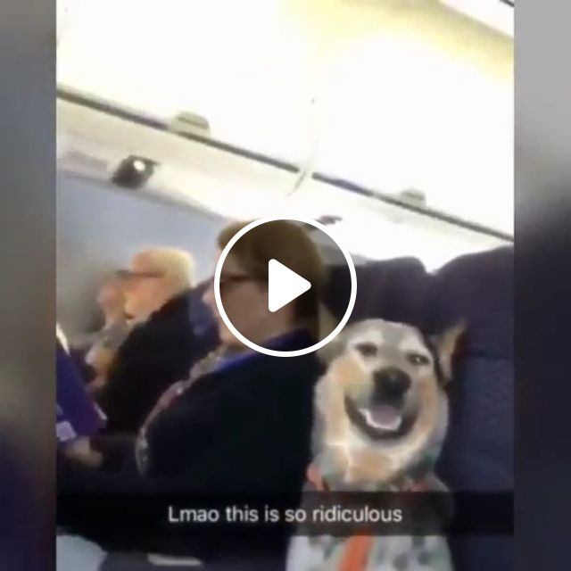 Dog on a Plane, funny, plane, funny dog, pet