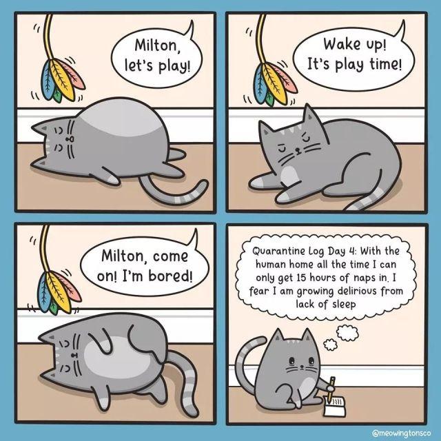 15+ Best New Cat Memes Quarantine Funny Memes - Romance Movies