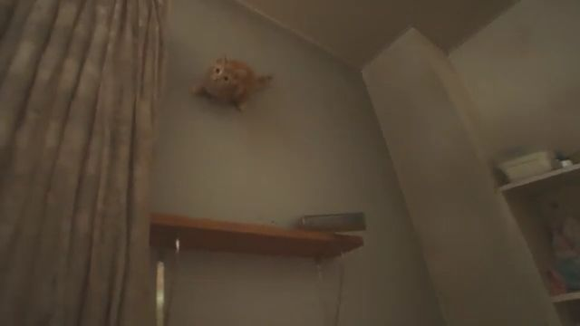 No way, little cat walking on the wall
