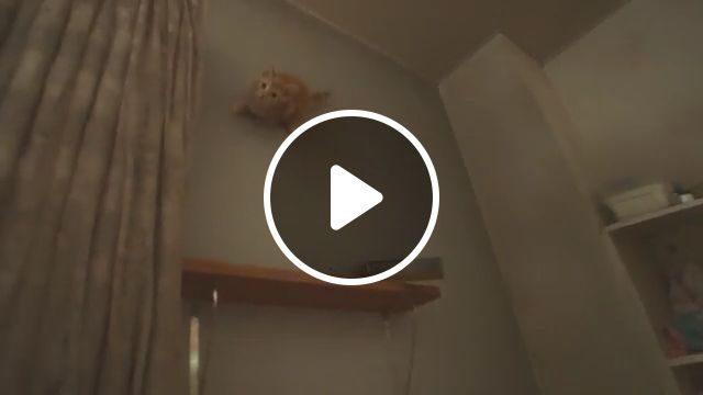 No way, little cat walking on the wall, funny cat gifs, funny pet gifs, kitten, wall, magic