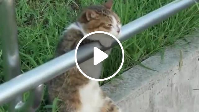 Think About Life - Funny Videos - funvizeo.com - cat, pet, adorable, life