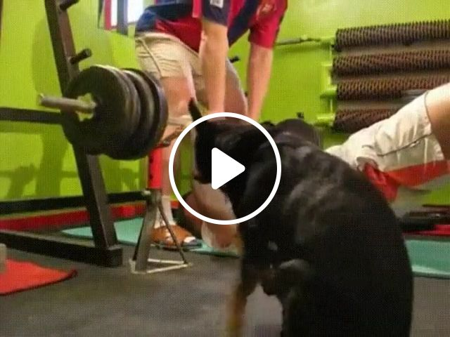 Exercises for You and Your Dog, dog, exercise, pet