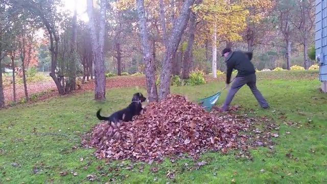 Dog helping his owner clean the garden