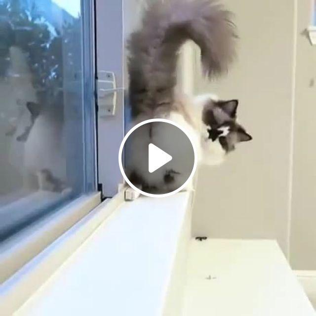 Back off, cat, pet, adorable