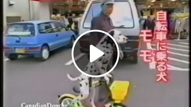 He likes cycling more than walking, lol - Funny Videos - funvizeo.com - Dalmatian Dog, funny dog, funny pet, walking vs cycling, Baby Bicycle