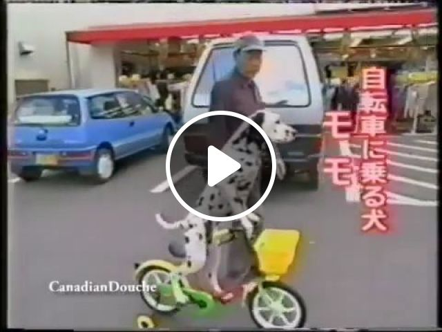 He likes cycling more than walking, lol, dalmatian dog, funny dog, funny pet, walking vs cycling, baby bicycle