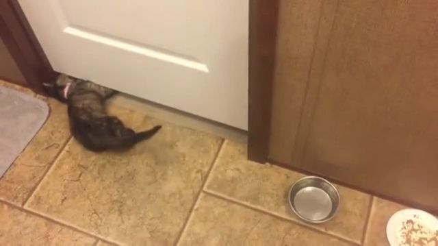 Mission Impossible - The Little Cat