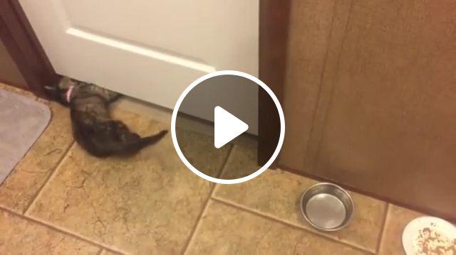 Mission Impossible - The Little Cat, cat, pet, door