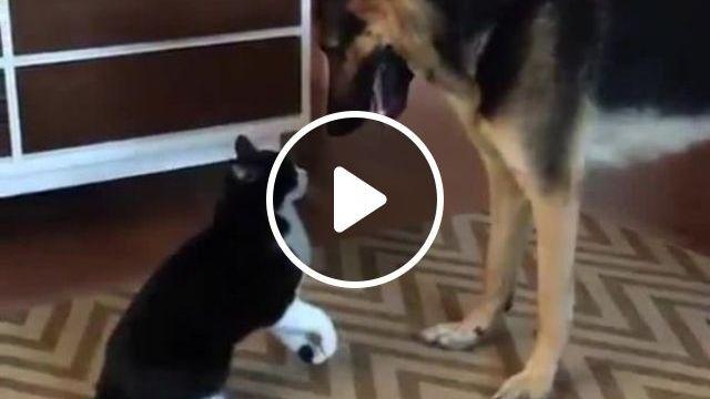 Still Loving You, dog, cat, love, pet