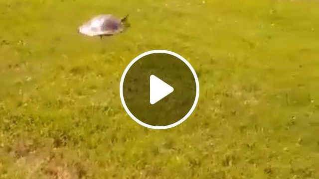 Are Turtles Slow Or Fast - Video & GIFs | funny animal videos, funny turtle