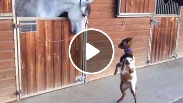Cute Baby Goat, cute animal, goat, baby, horse