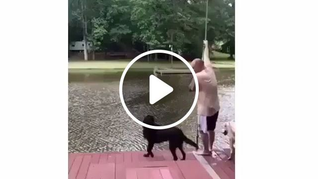 Dog jumps into the water to save his owner - Funny Videos - funvizeo.com - smart dog,pet,jump,owner