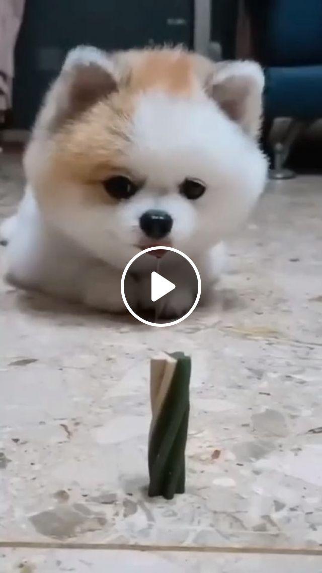 Cute Puppy Training - Video & GIFs   cute dog, cute pet, dog training, puppy