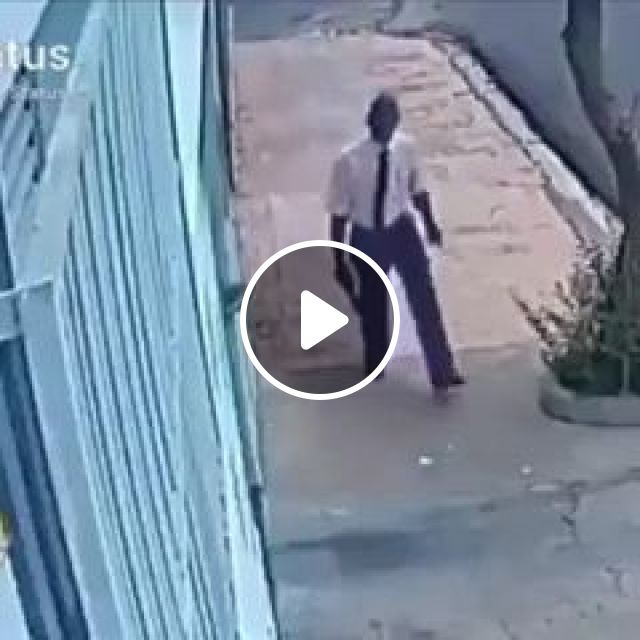 That Book Must've Meant A Lot To Him - Video & GIFs | funny, book, funny dog videos
